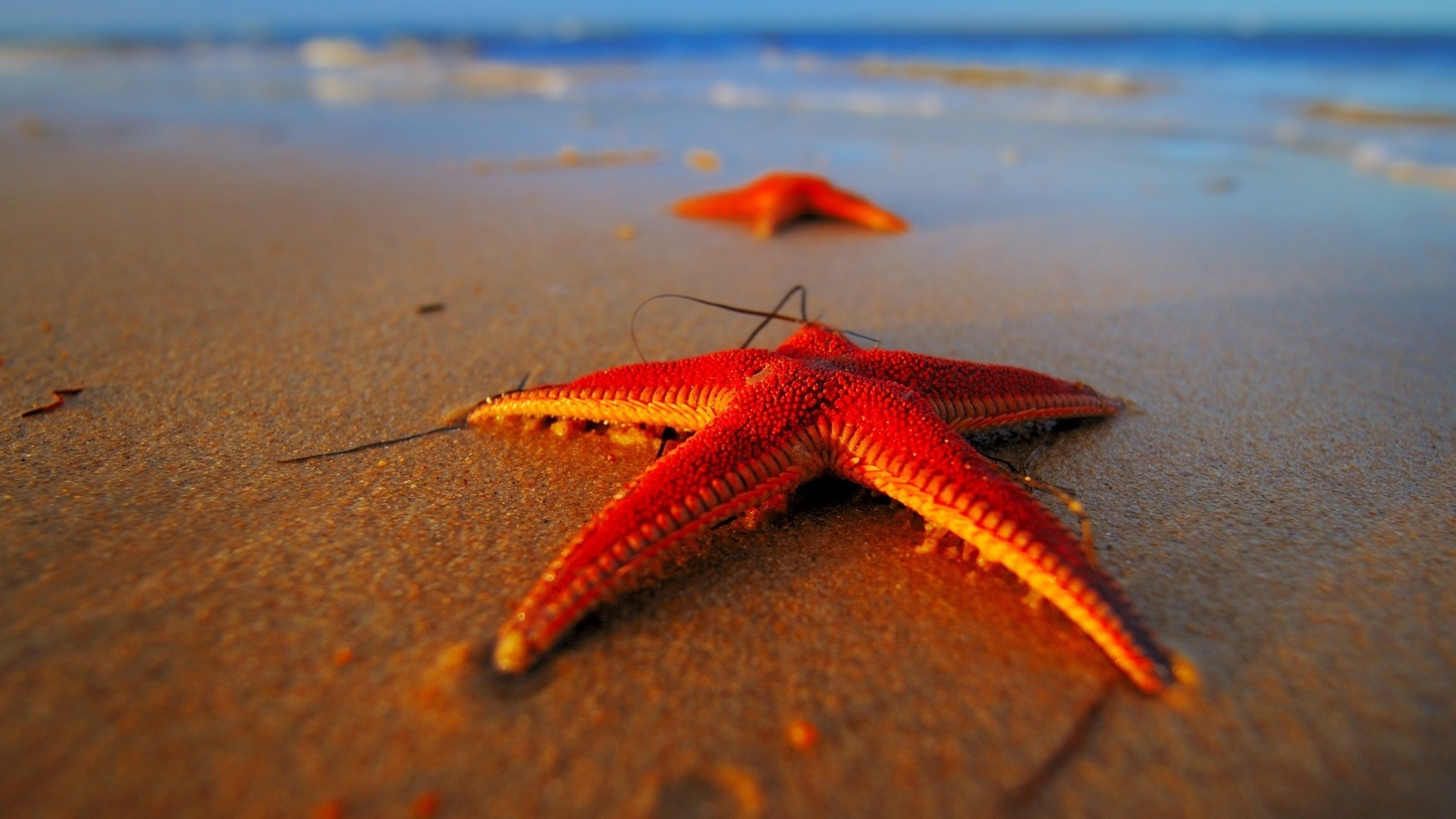 Starfish resting on the sand