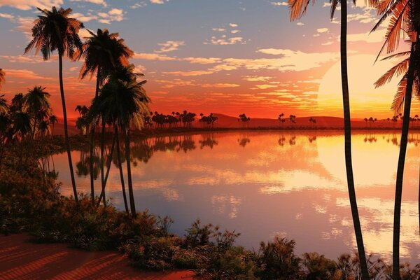 Sunset on the lake among the palm trees