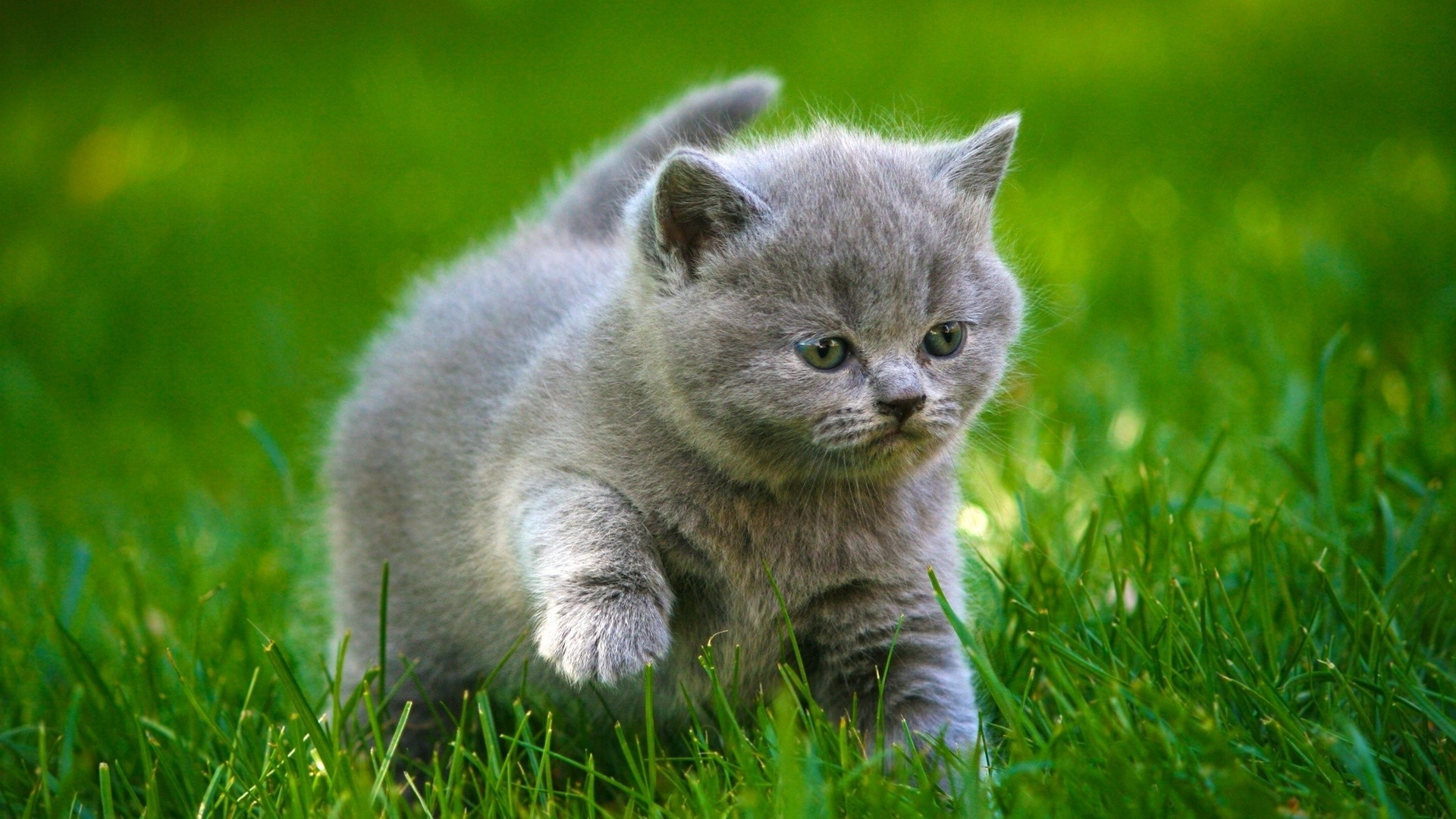 cats cute animal grass mammal little nature cat fur young baby pet adorable portrait domestic kitten