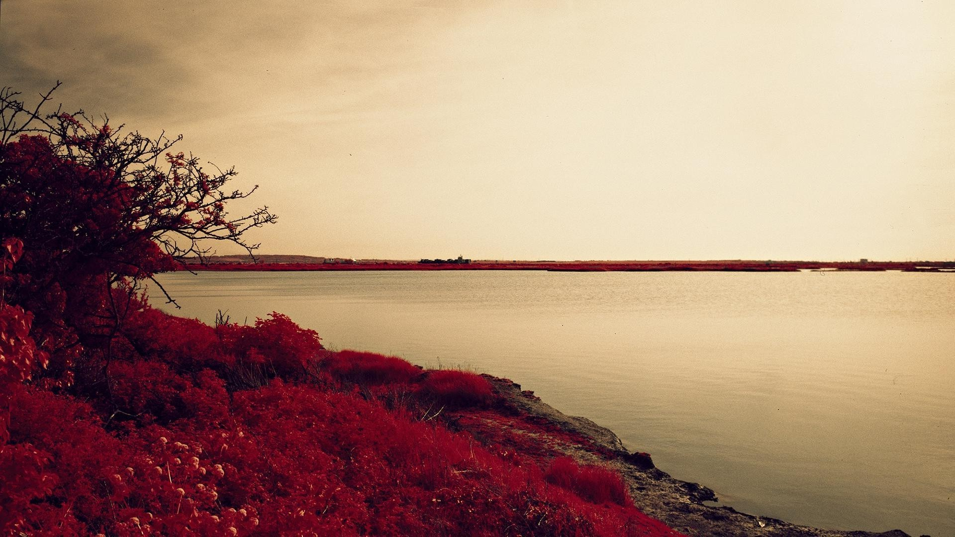 Red flowers, grass, bushes on the shore of lake