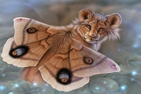 Lion cub butterfly
