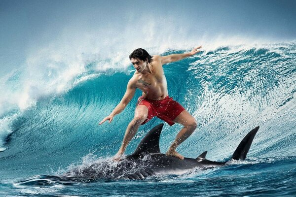 Surfing on a shark