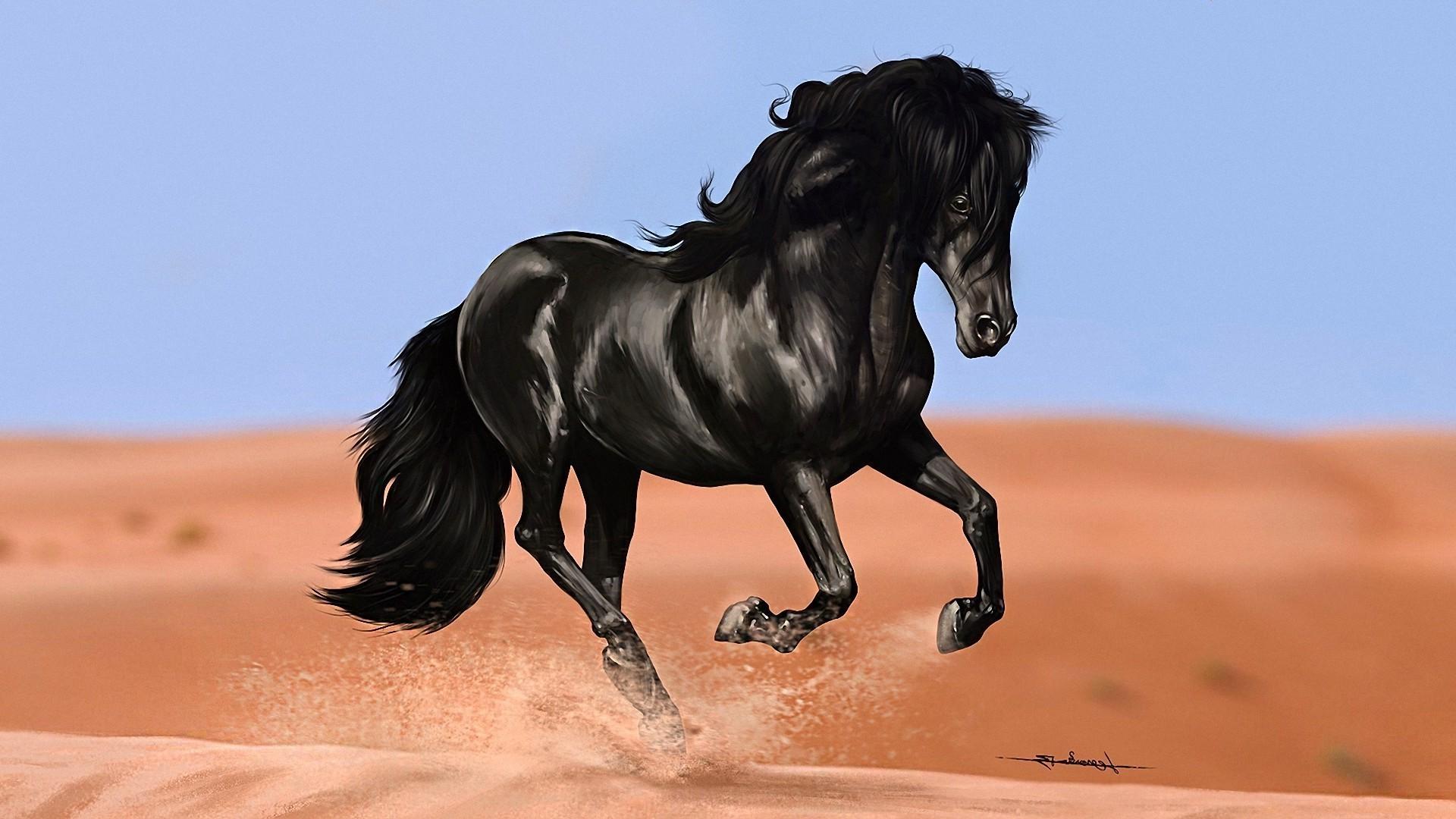 Красивый черный конь — Обои на рабочий стол HD качества | 1080x1920