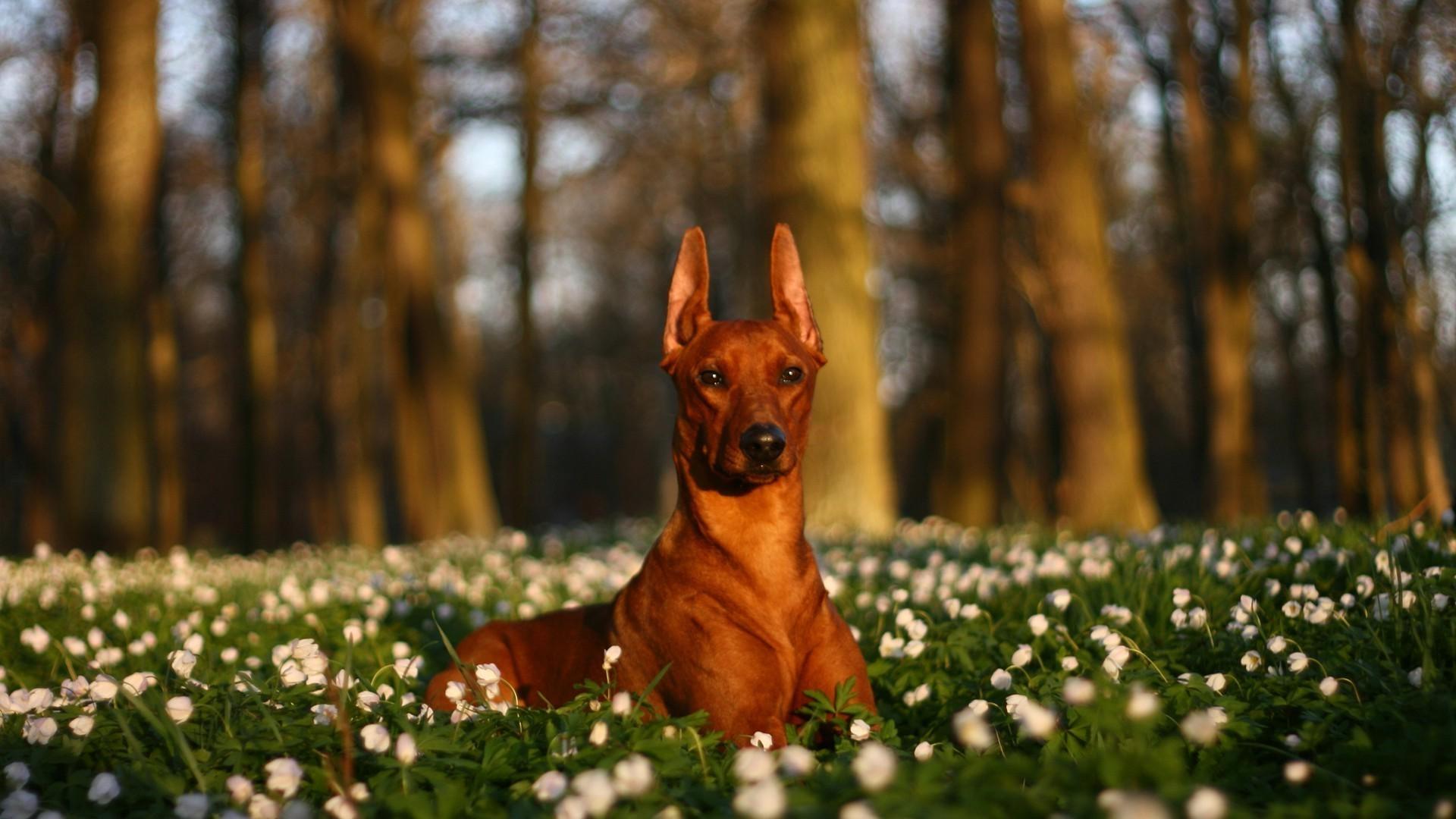 Собаки поляна смотреть