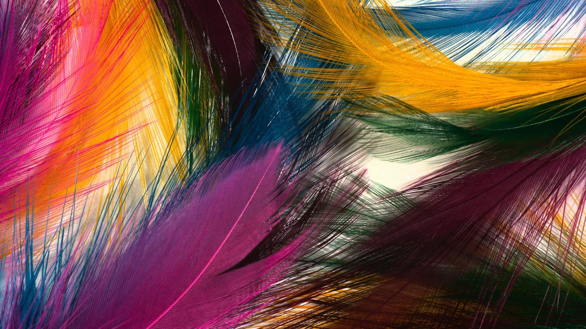 Love Music Android Wallpapers 960x854 Hd Wallpaper For: Multicolored Feathers. Android Wallpapers For Free