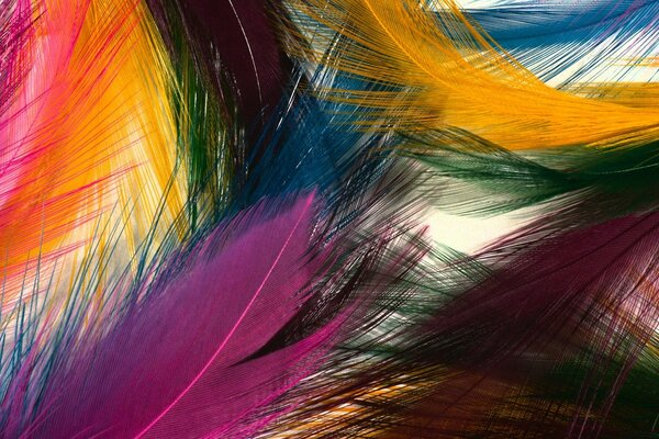 Multicolored feathers