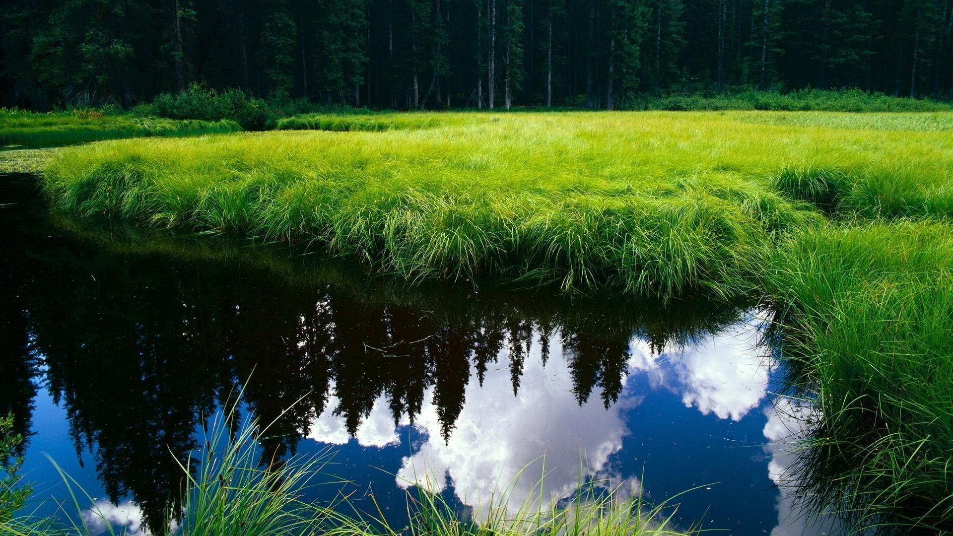 озеро деревья зелень лес лето  № 3246367 бесплатно