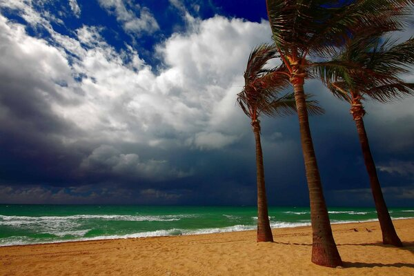 On a tropical island approaching storm