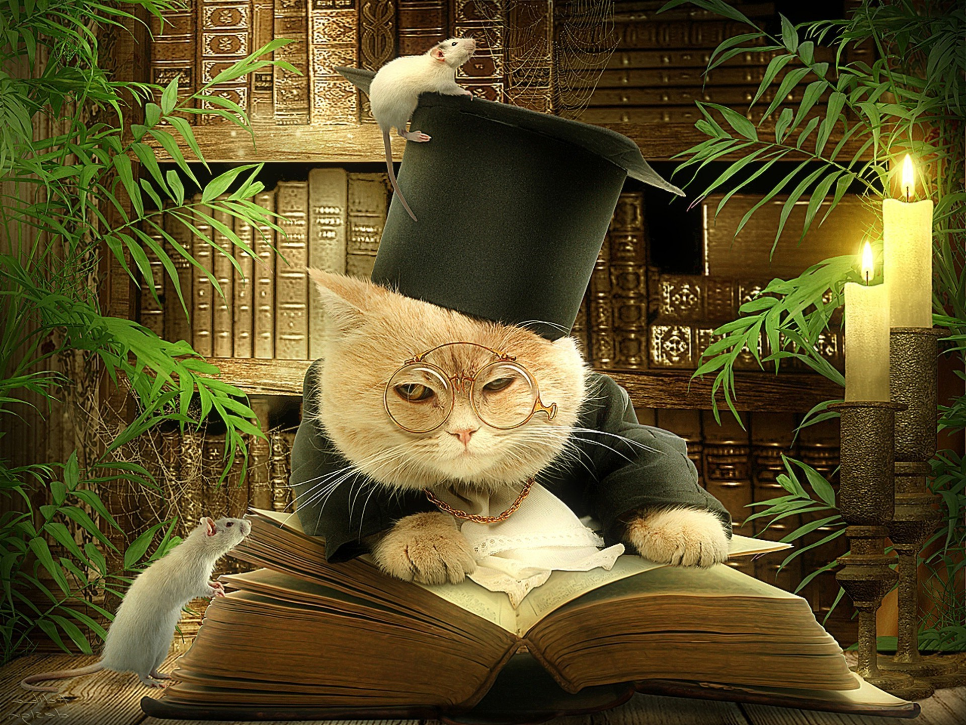 Wise cat reading a book