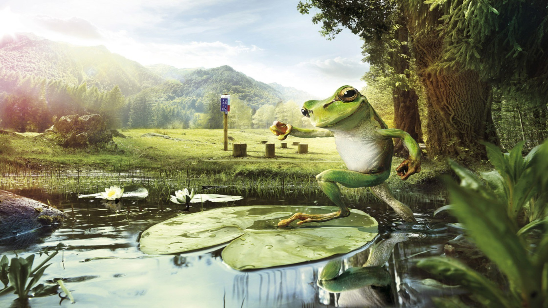 Frog On The Pond. Android Wallpapers For Free