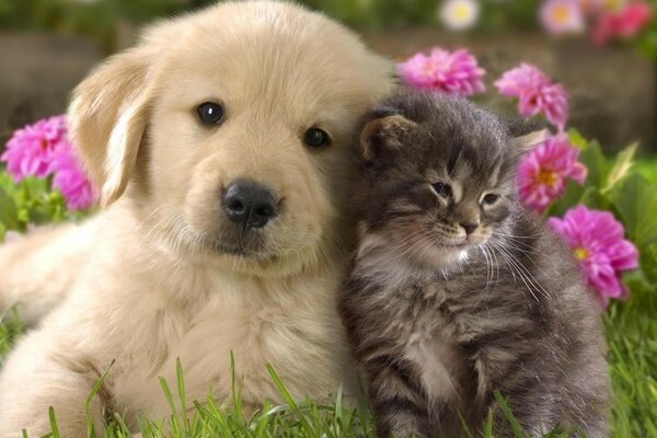 Puppy with kitten