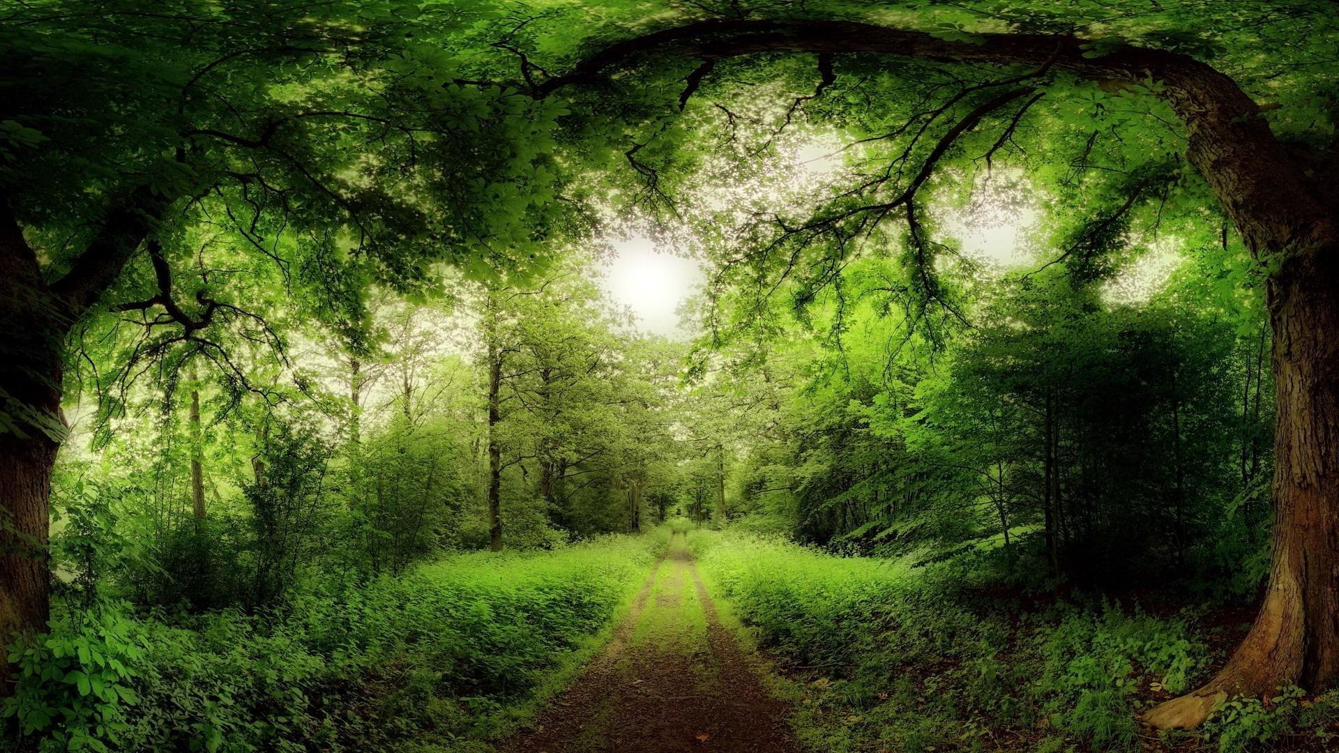 в чаще леса загрузить