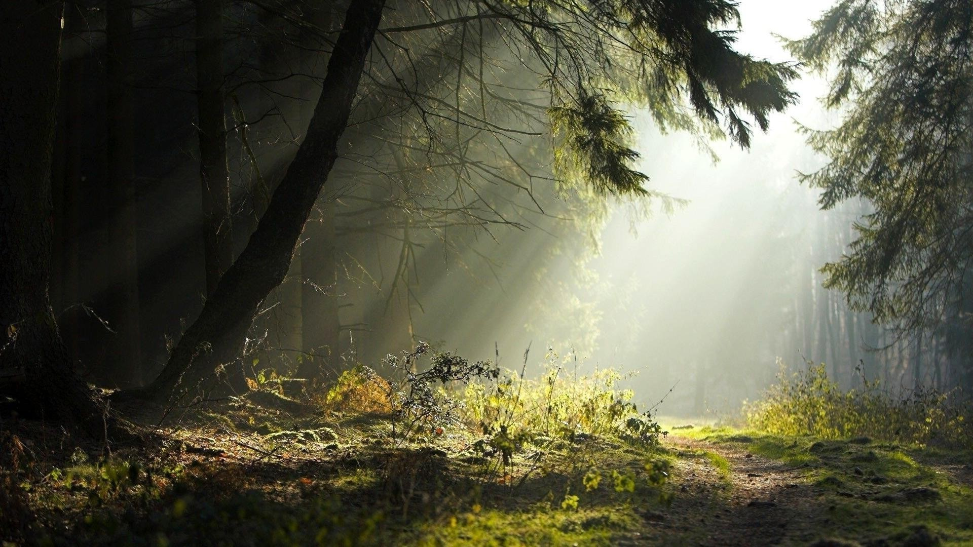 Sunlight is streaming in the thick of the forest