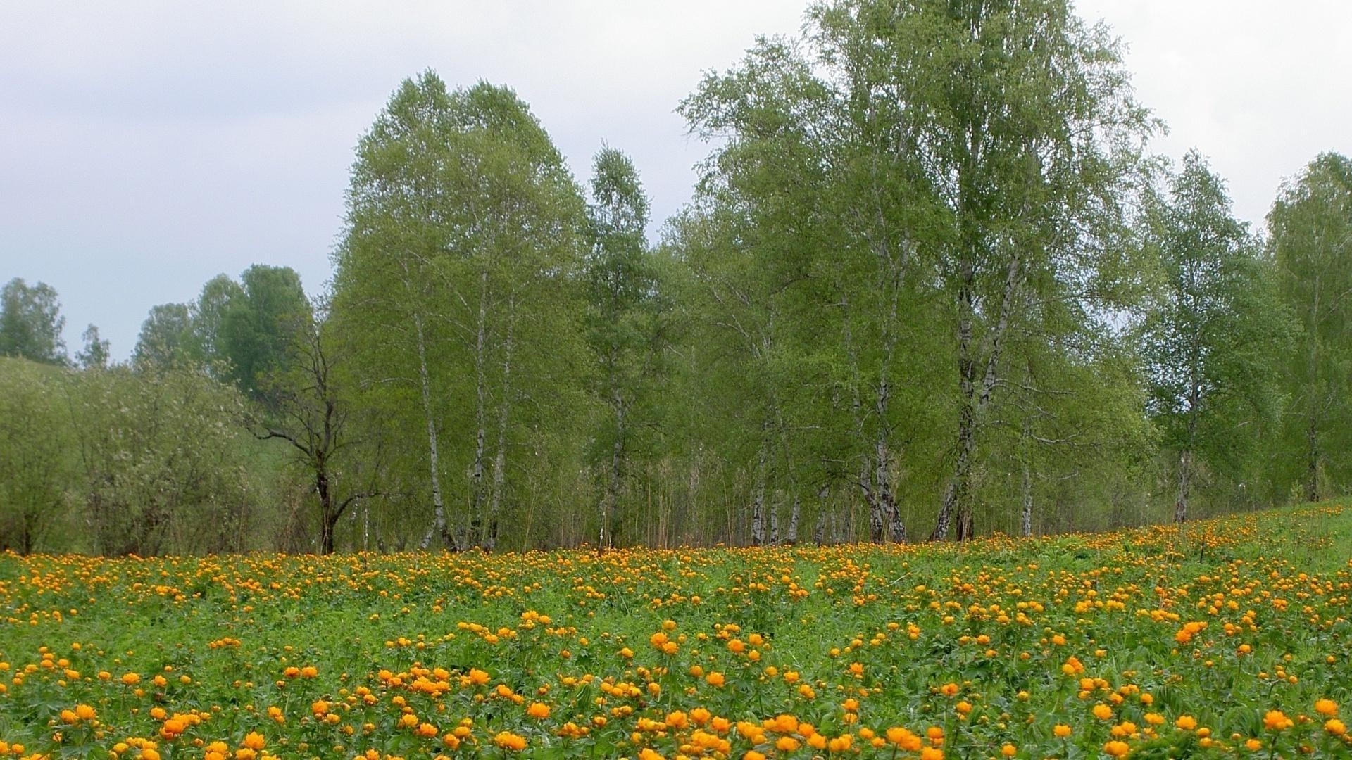 Field orange flowers of the forest