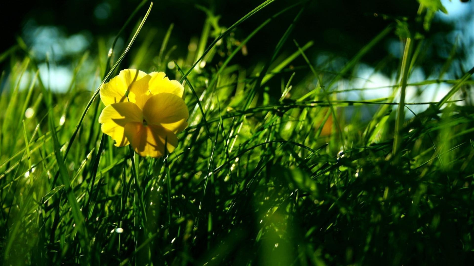 Yellow Flower In The Grass Android Wallpapers For Free
