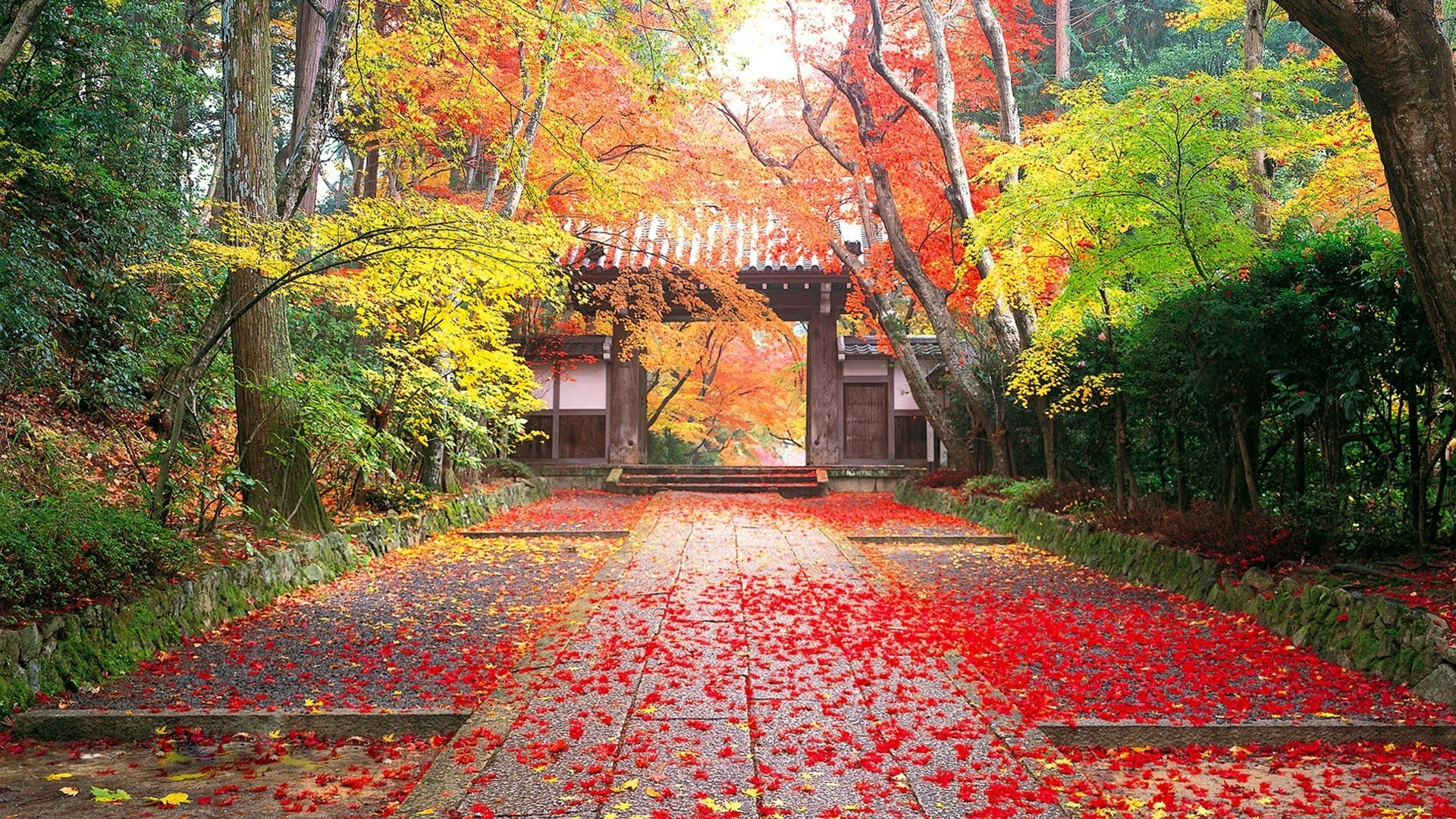 Autumn in Japan - Phone wallpapers