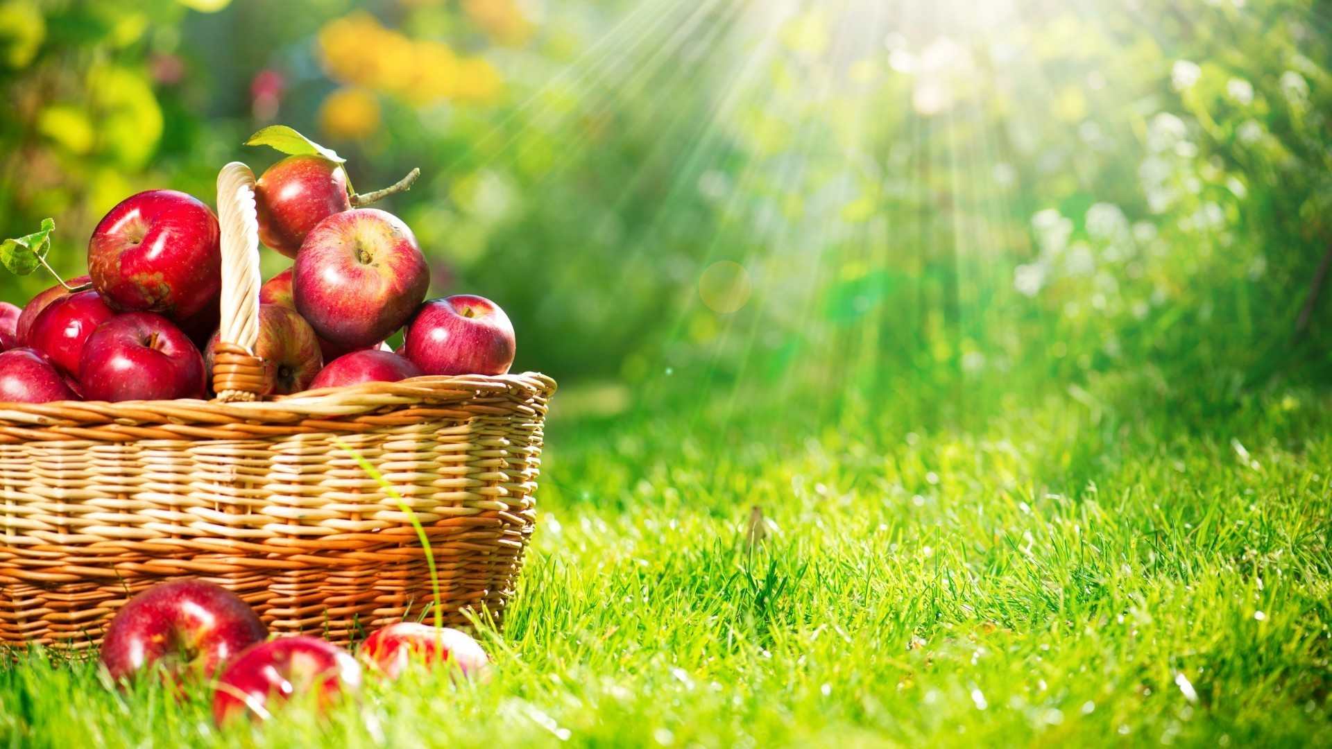 Basket with red apples in the sun on the grass