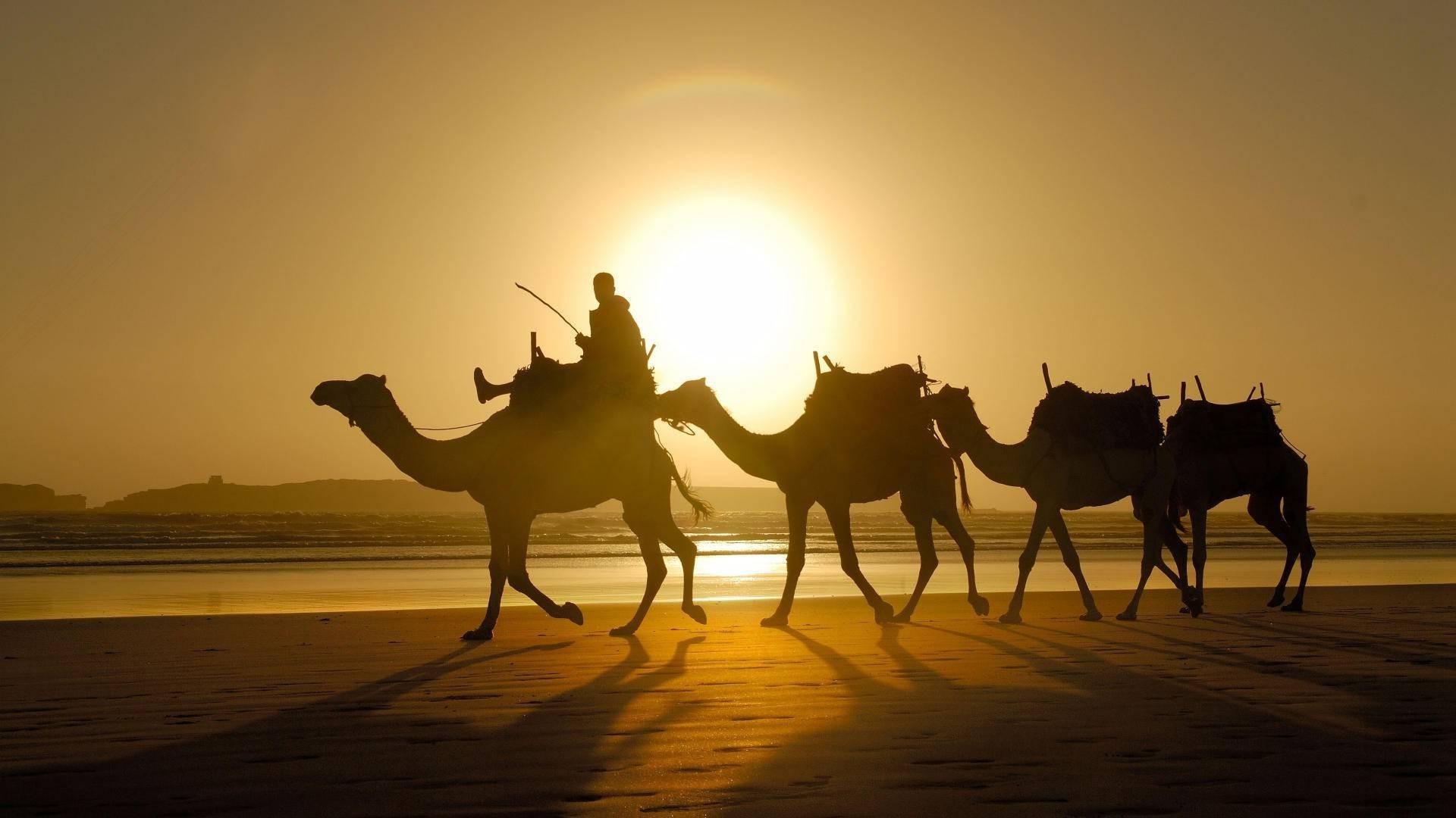 стая верблюдов на берегу загрузить