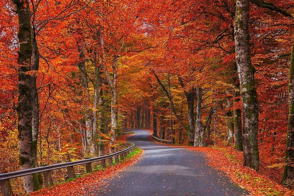 Autumn forest, winding road