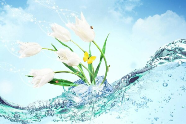 White flowers in water and yellow butterfly