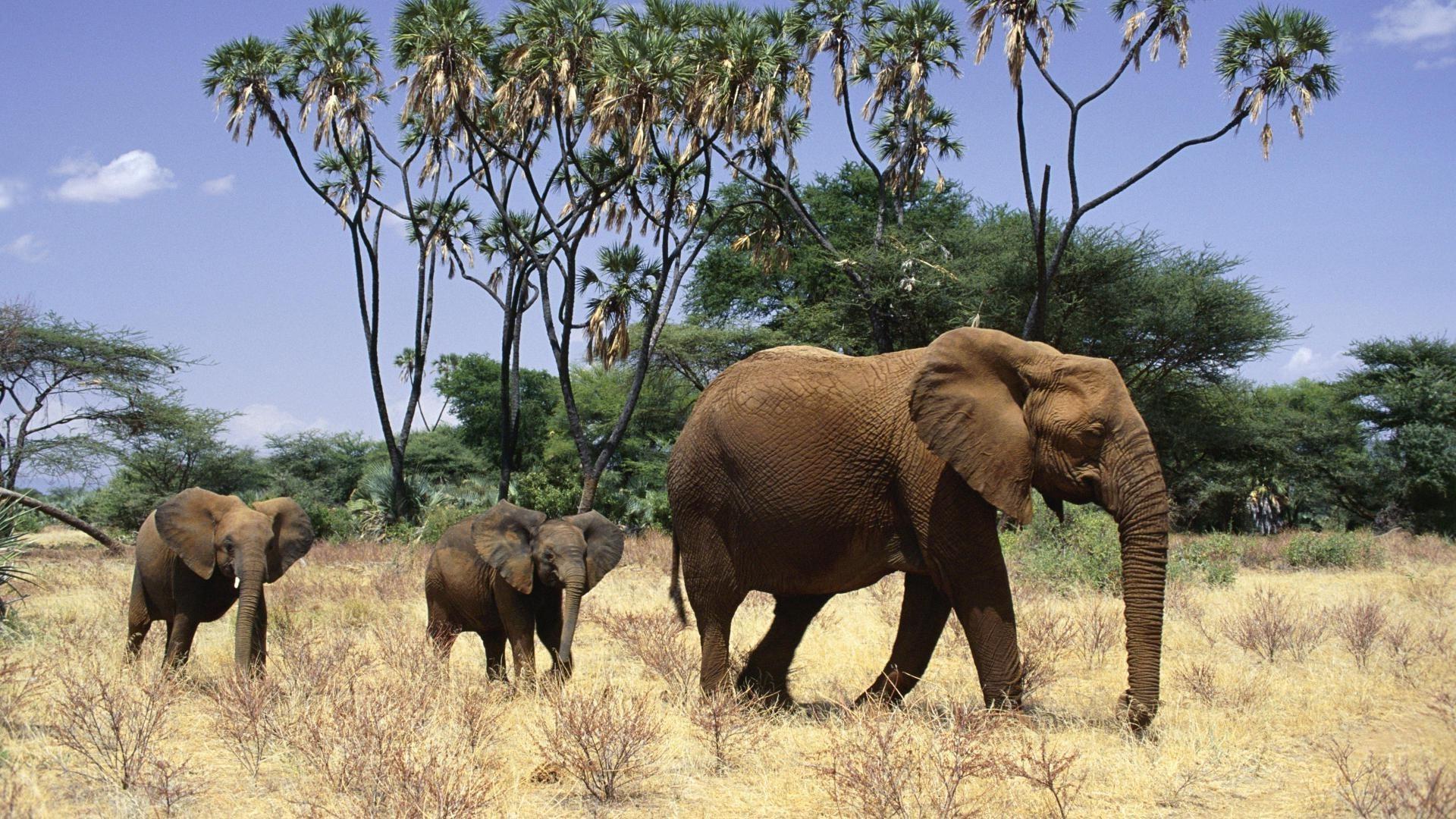 Most Inspiring Wallpaper Home Screen Elephant - 11831175604404508523  Pictures_739266.jpg