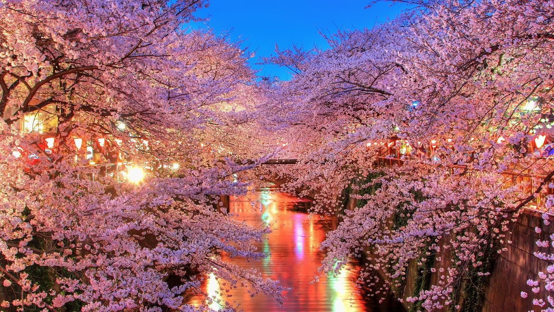 Sakura Over The Water Android Wallpapers For Free