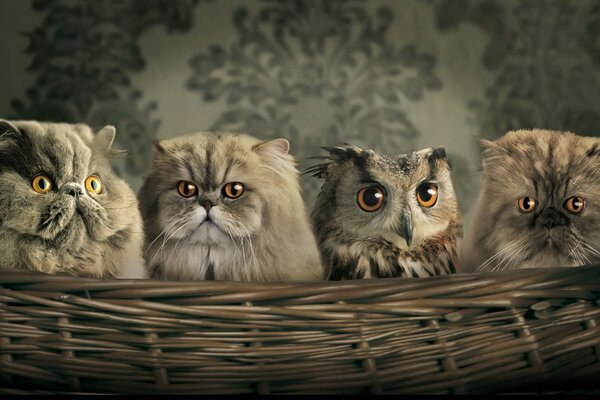 Find 10 differences between cats and owl