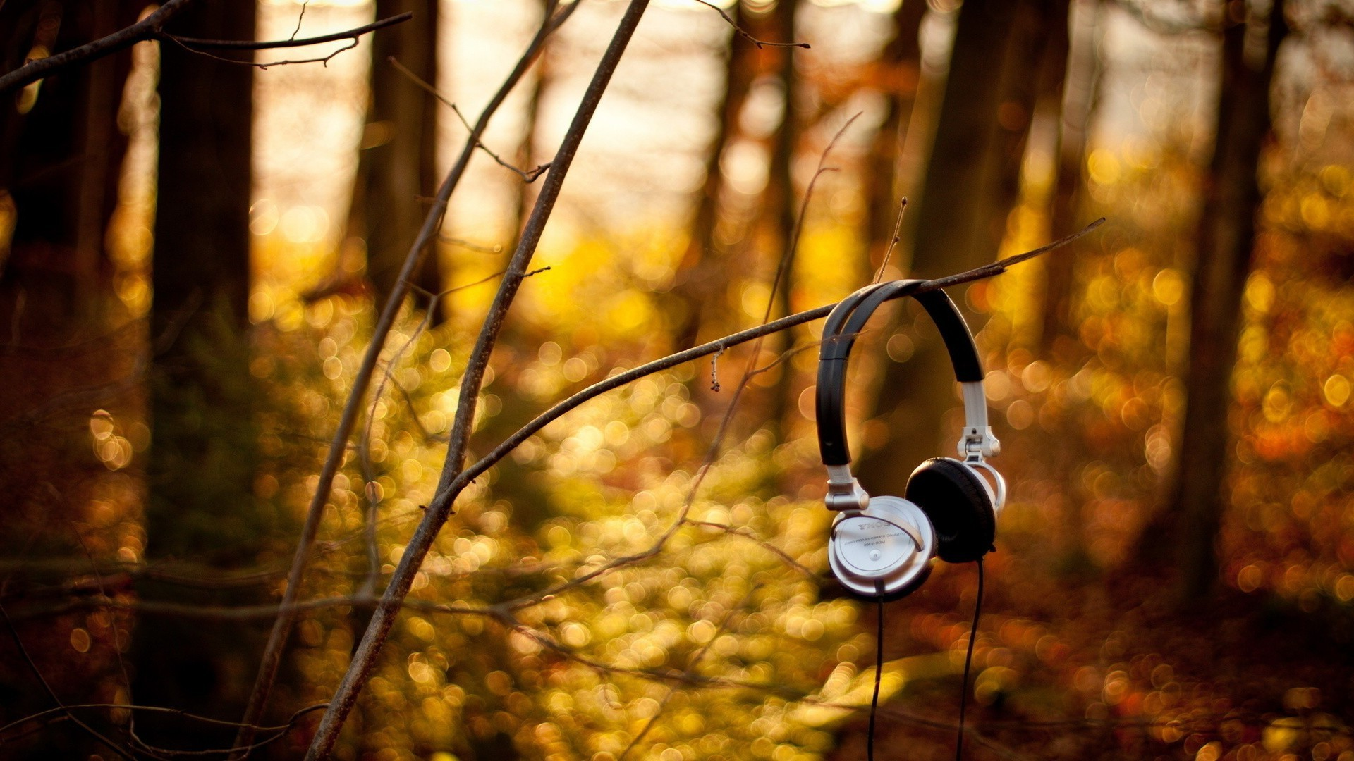 music fall wood tree nature leaf outdoors gold park light one