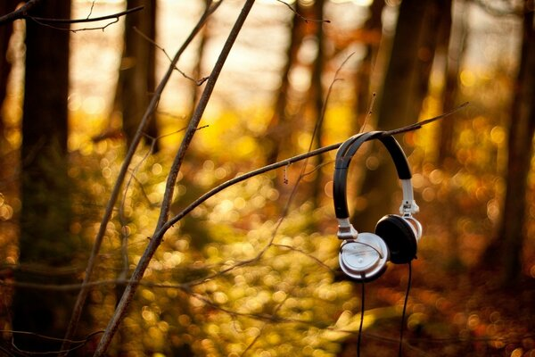 And nature loves music