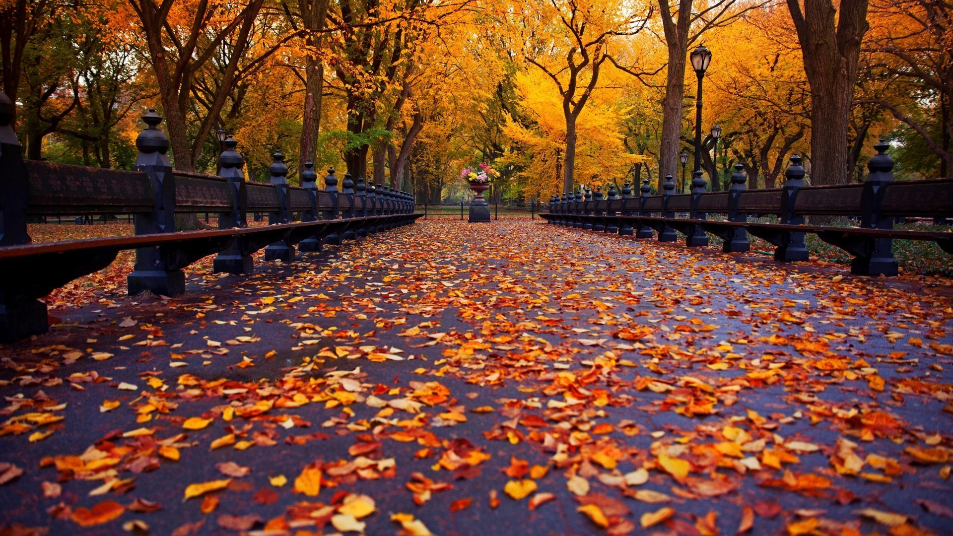 Autumn Alley Leaves Yellow Android Wallpapers