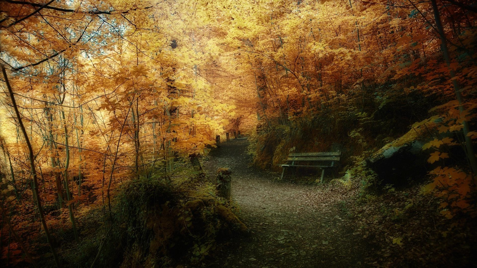 autumn fall wood tree landscape light park nature