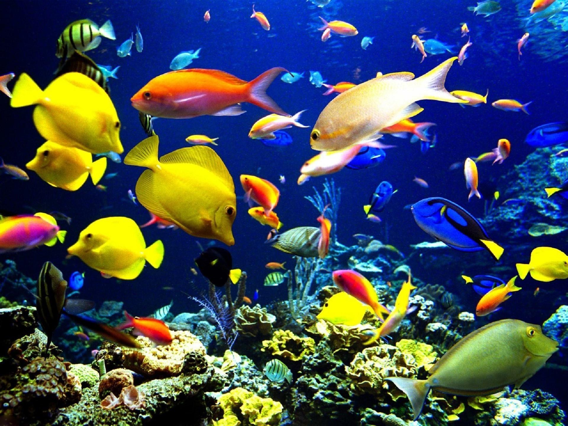 Reef Fish Desktop Wallpapers For Free
