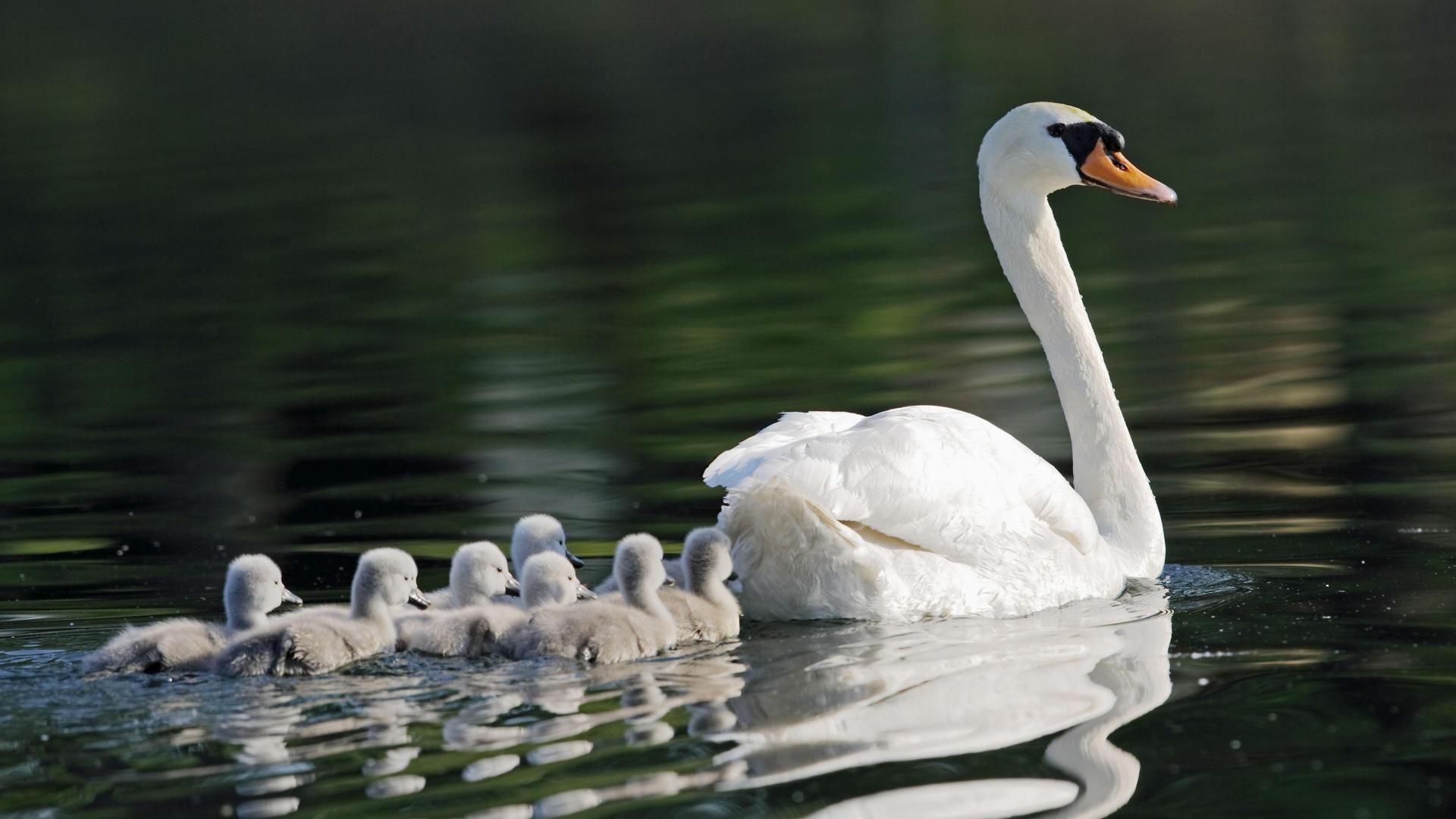 семья озеро чайка платье загрузить