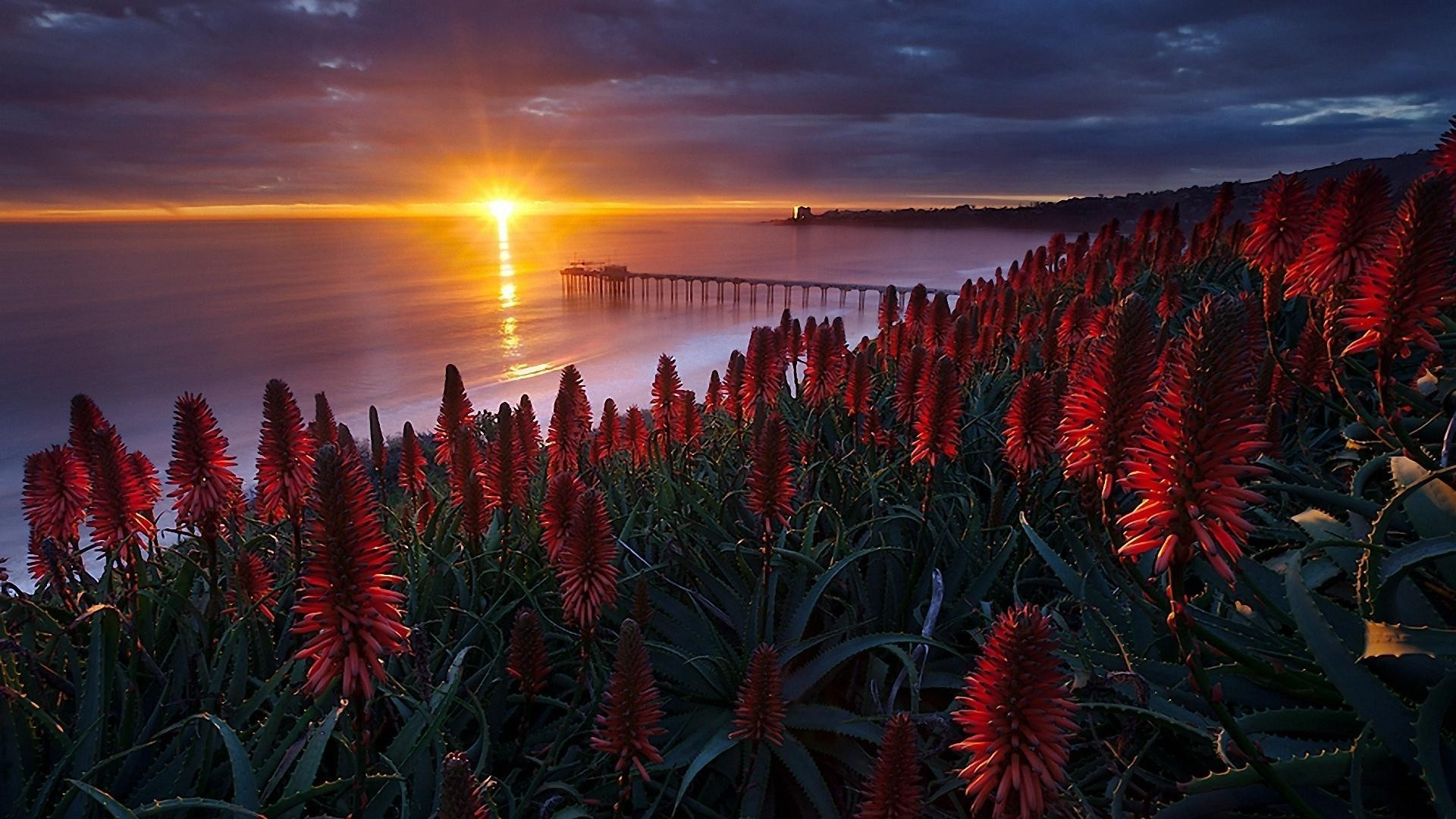 the sunset and sunrise sunset nature color flower landscape sun beach tree dawn sky outdoors flora travel