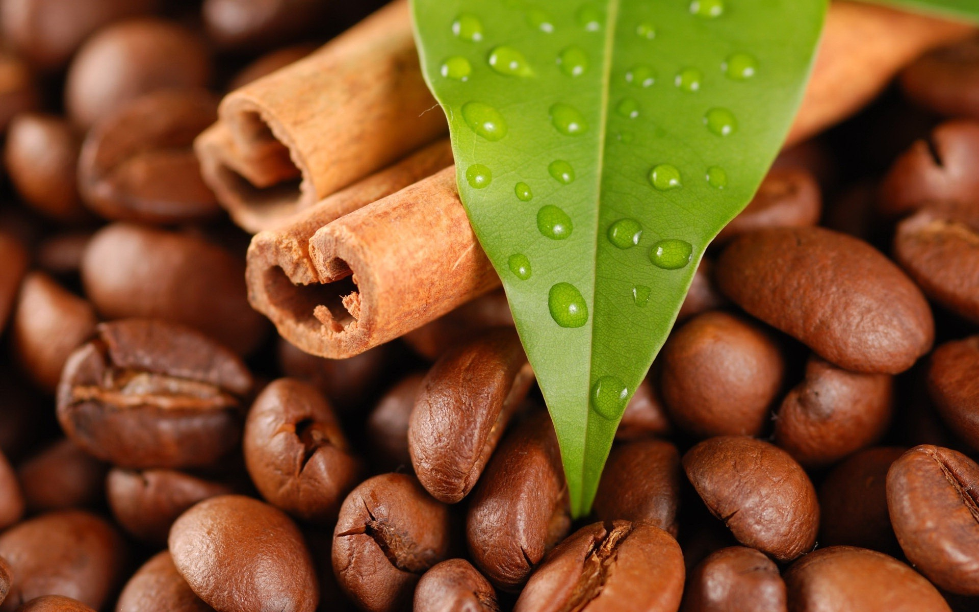 coffee bean caffeine food perfume espresso dark mocha drink cappuccino seed dawn crop batch close-up