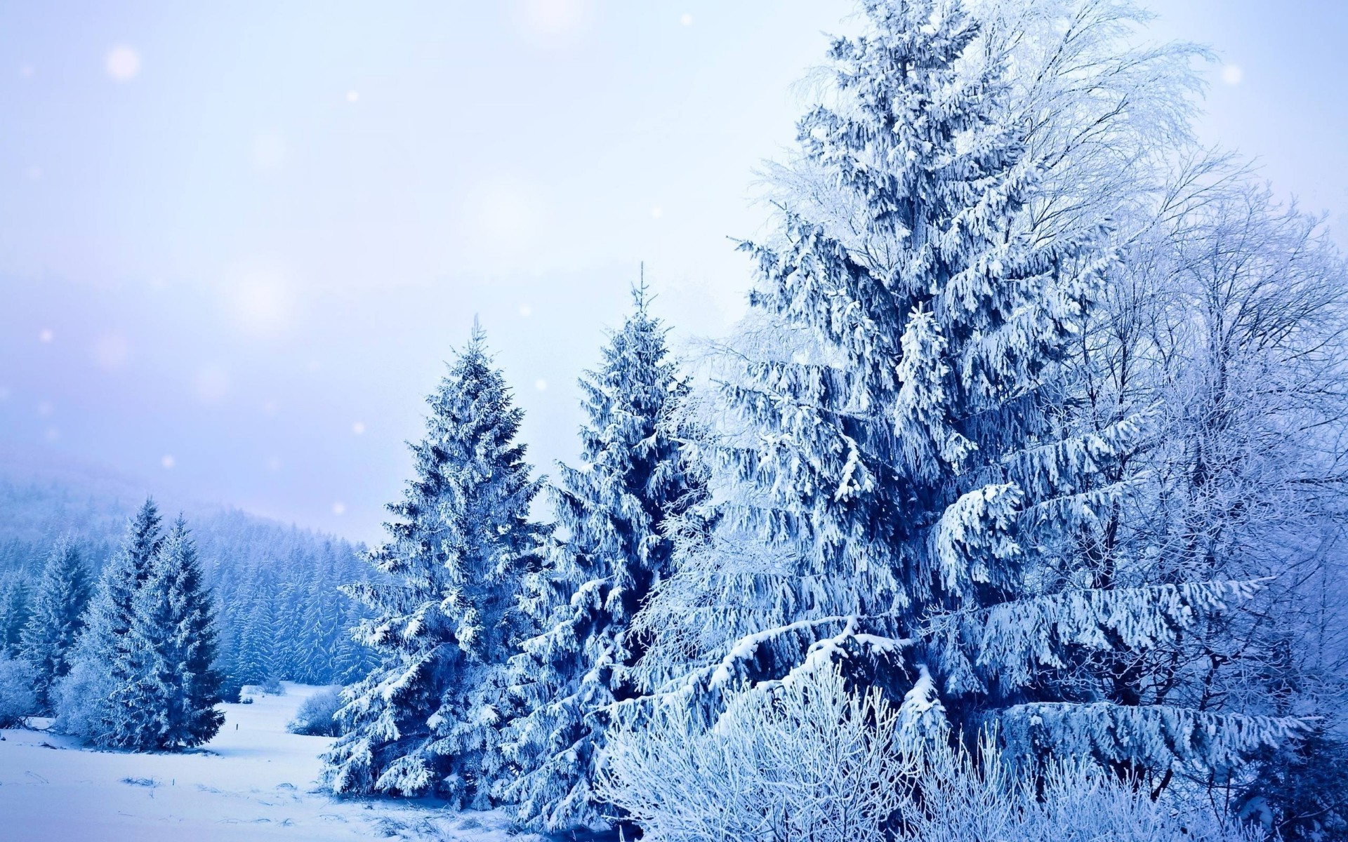 winter snow frost cold frozen wood season tree ice fir nature pine christmas evergreen spruce landscape weather snow-white