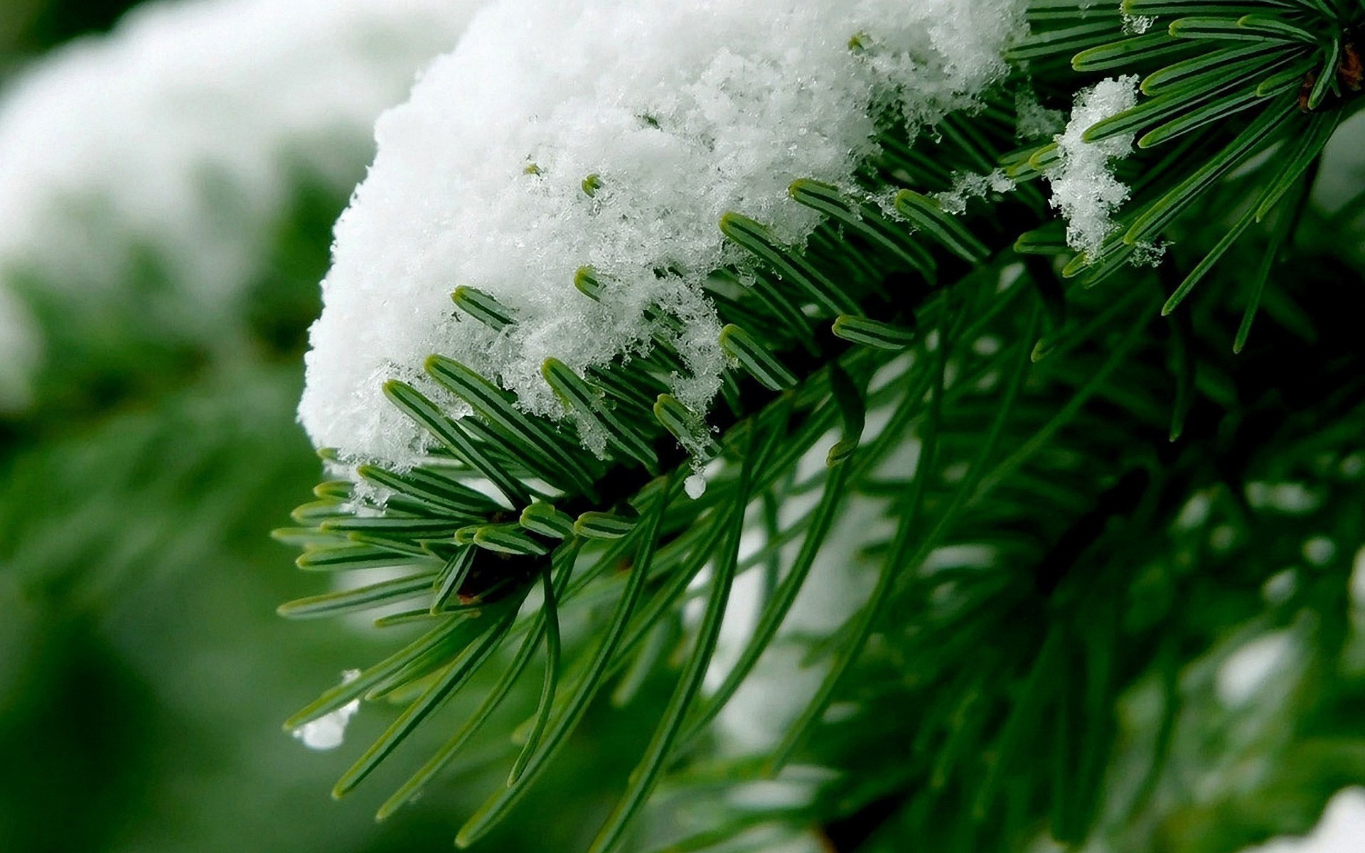 landscapes winter christmas tree evergreen blur celebration pine snow decoration conifer fir season nature leaf needle close-up branch light bright