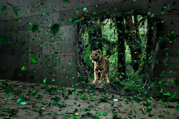 Tiger in the broken wall, green leaves