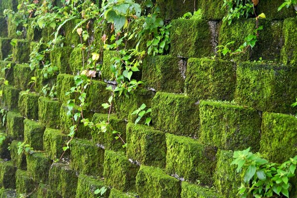 Wall covered with greenery