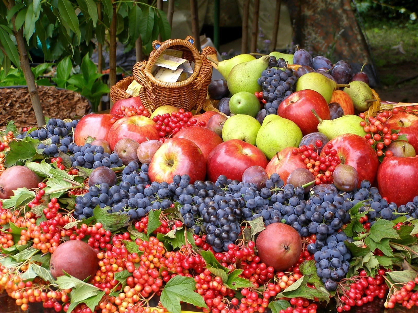 fruit grow food market agriculture pasture juicy abundance berry apple healthy confection fall leaf garden basket nature
