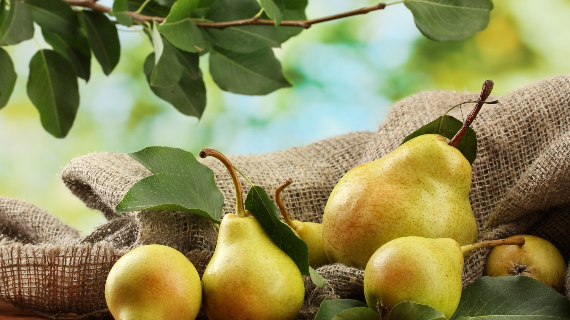 fruit food leaf pasture juicy apple pear nature fall healthy agriculture grow confection nutrition flora health desktop close-up tree