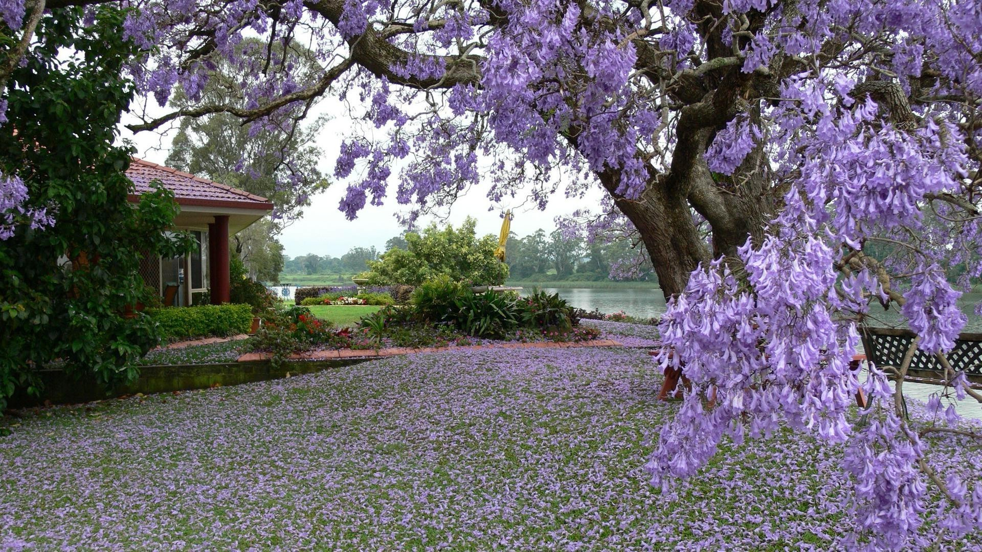 trees flower garden tree flora blooming nature springtime park floral season outdoors color lavender leaf summer petal branch landscape beautiful