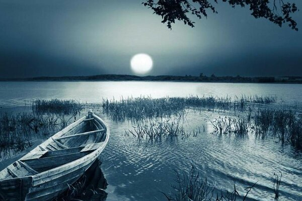 Night, river, reed, boat