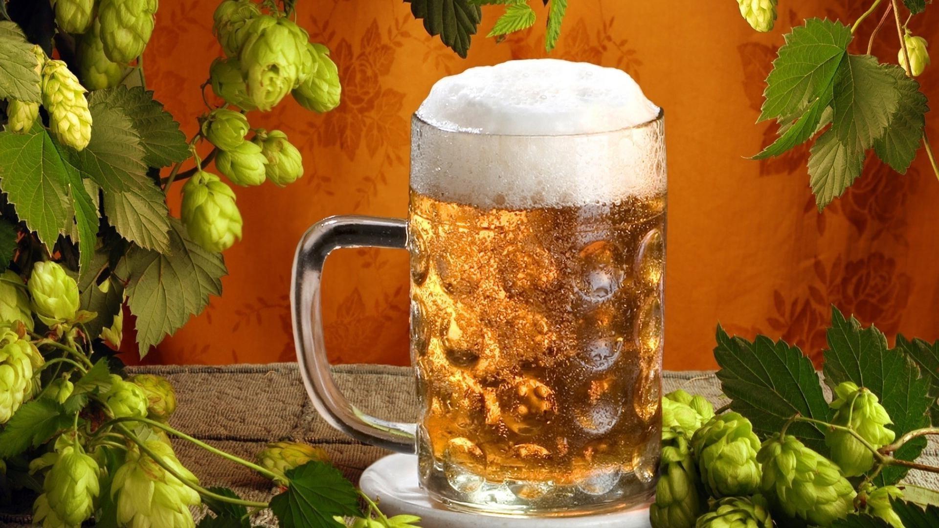 Beer Hops Desktop Wallpapers For Free
