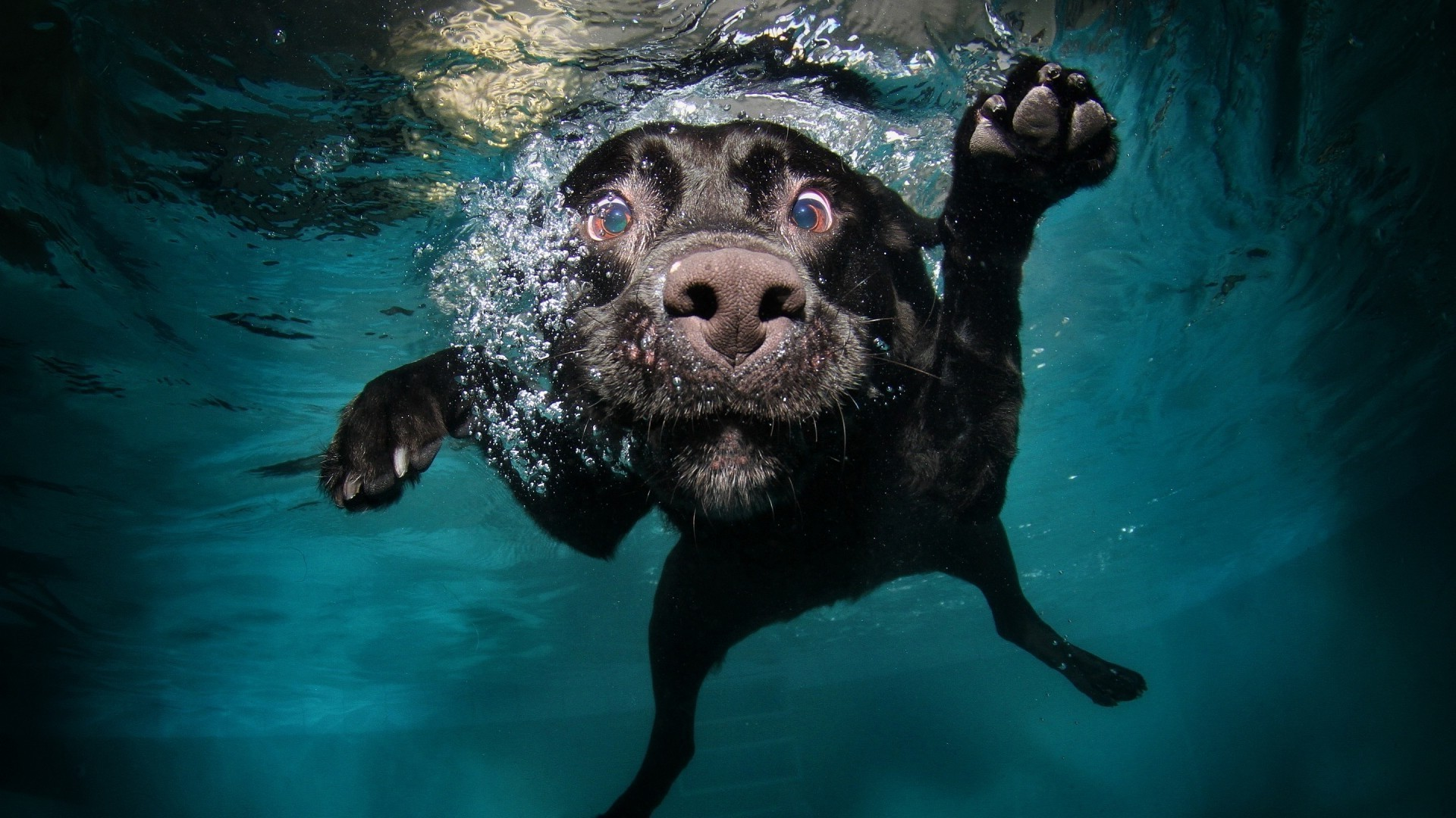 dogs underwater swimming water mammal one