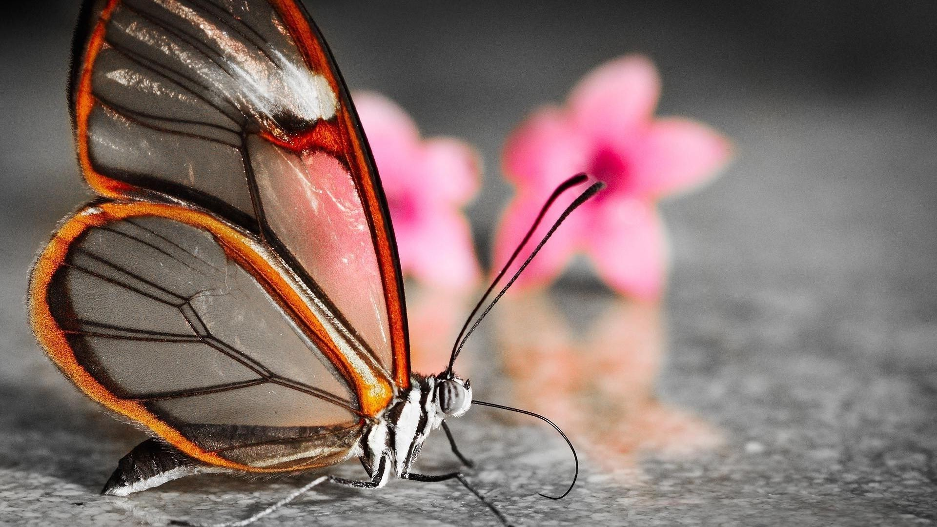 animals butterfly insect invertebrate nature outdoors one wildlife summer wing animal flower daylight color