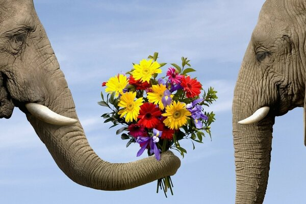 Elephant gives beloved a bouquet of flowers