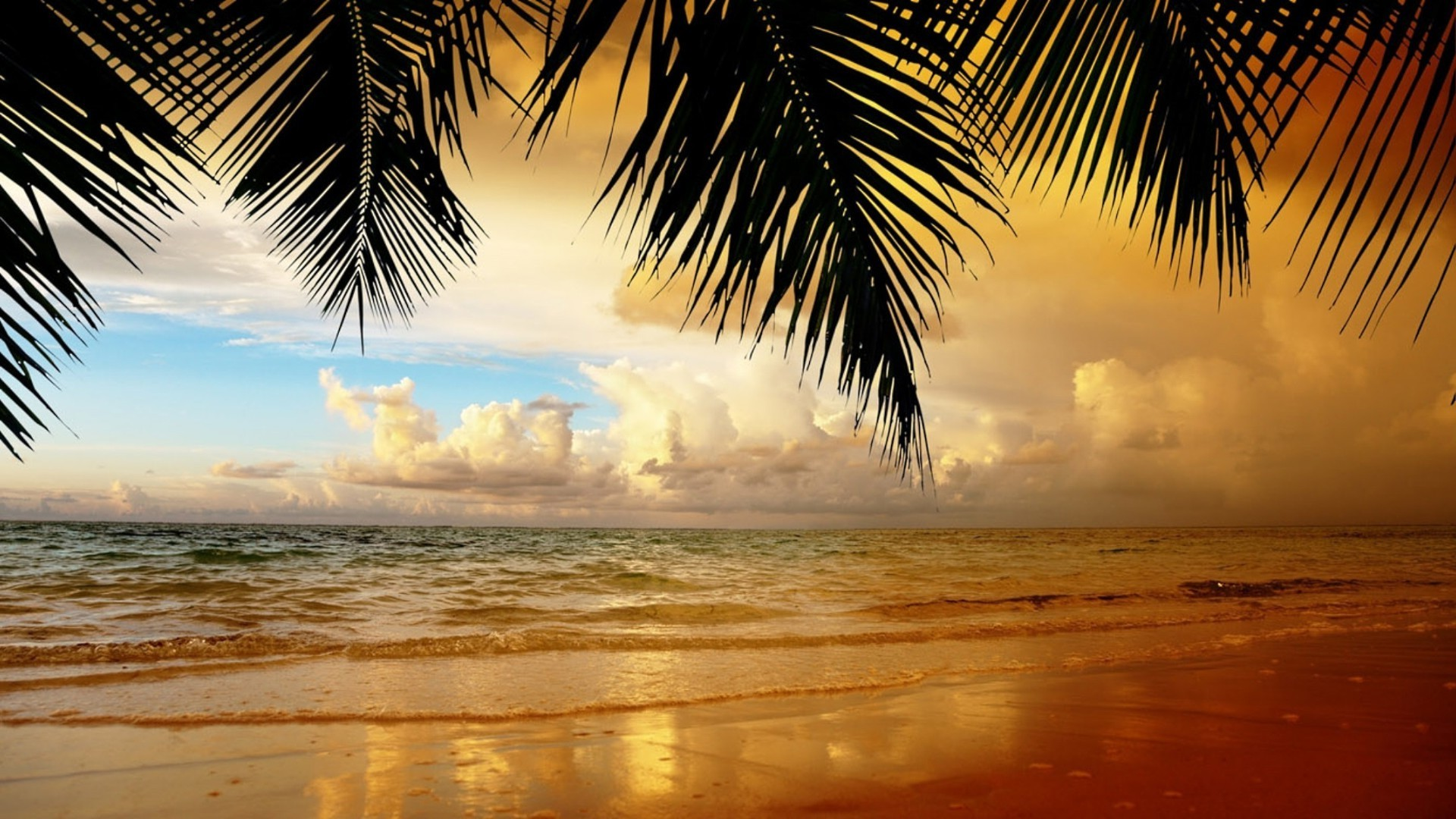 sea and ocean beach tropical sun sand water summer ocean sunset palm exotic seashore seascape resort travel sea island relaxation vacation sky idyllic