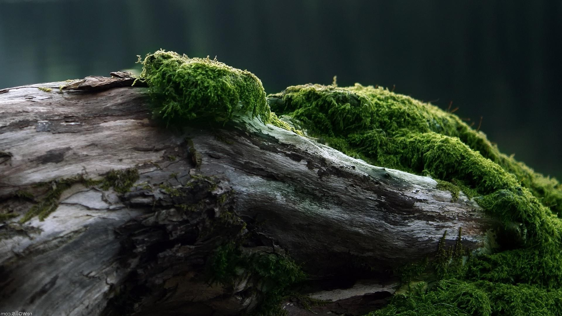 texture moss water nature outdoors wood landscape rock park leaf tree environment waterfall mossy travel river flora daylight summer