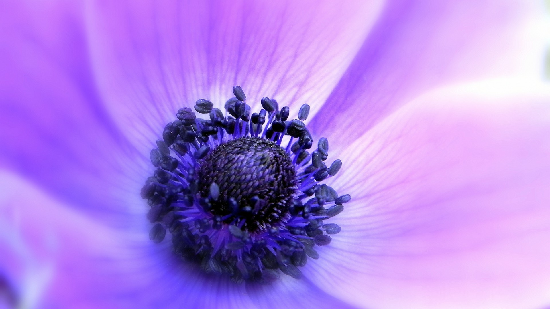 Фиолетовые цветы фото картинки на телефон